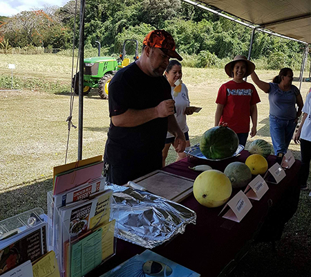 Agriculture Presentation on melon varieties