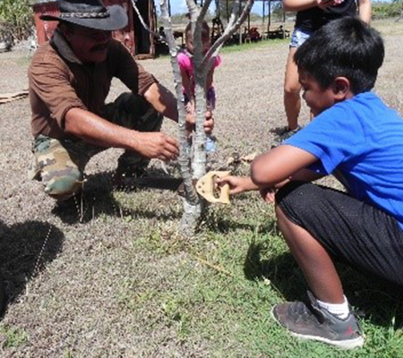 pruning-activity